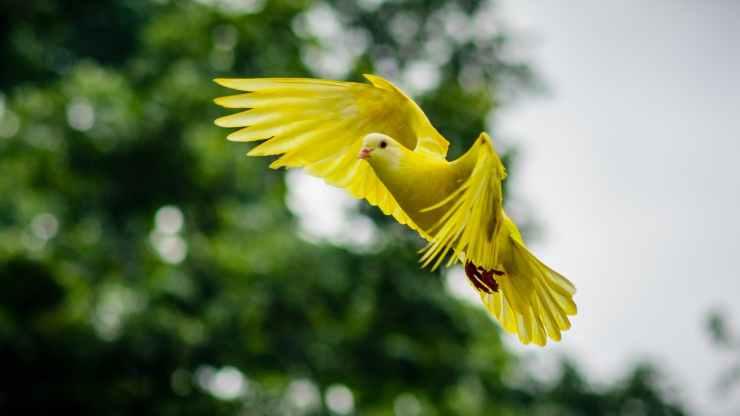 animal avian bird bright