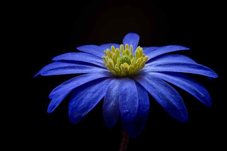 nature blue garden yellow