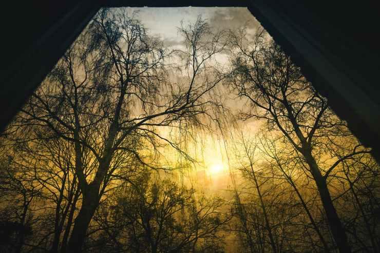 black branches dawn drama